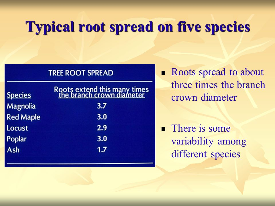 Typical root spread on five species