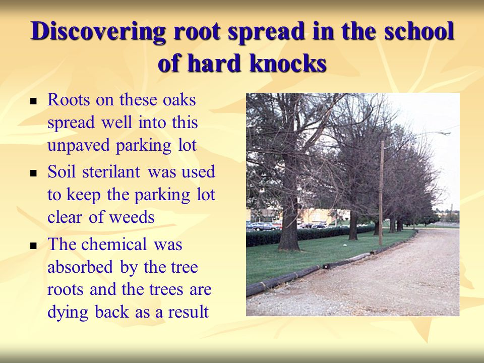 Discovering root spread in the school of hard knocks