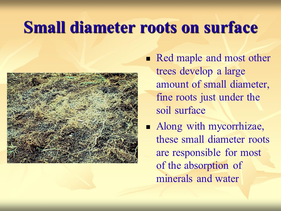 Small diameter roots on surface