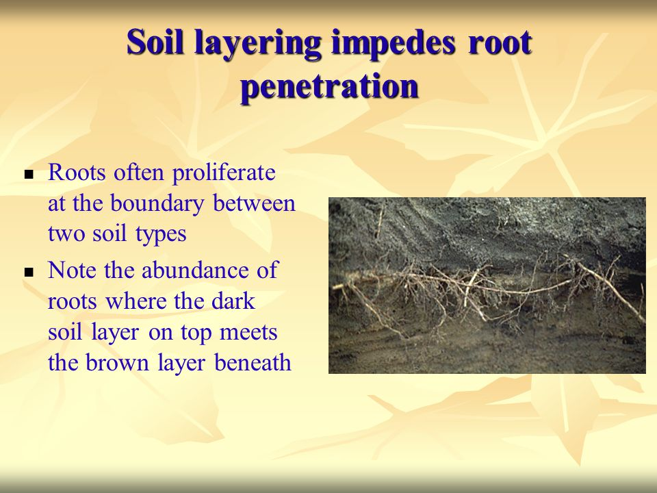 Soil layering impedes root penetration