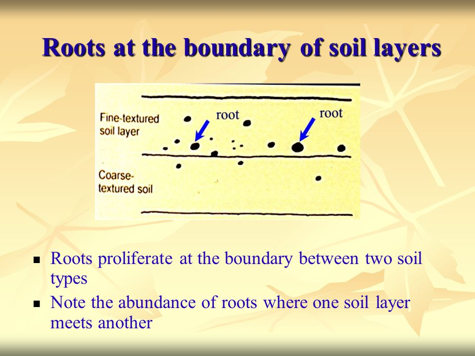 Roots at the boundary of soil layers