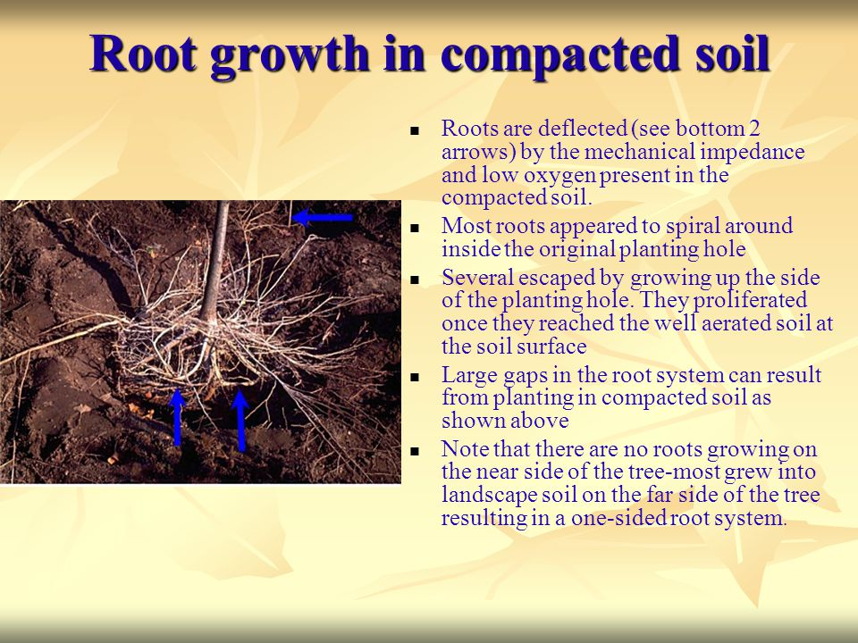 Root growth in compacted soil
