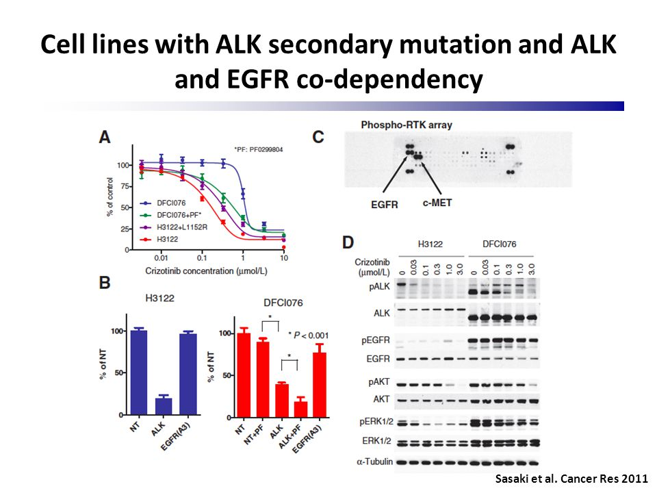 Cell lines with ALK secondary mutation and ALK and EGFR co-dependency