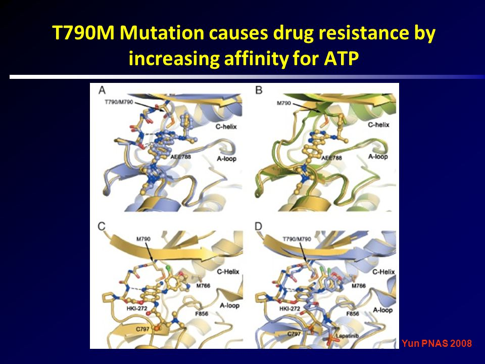 T790M Mutation causes drug resistance by increasing affinity for ATP