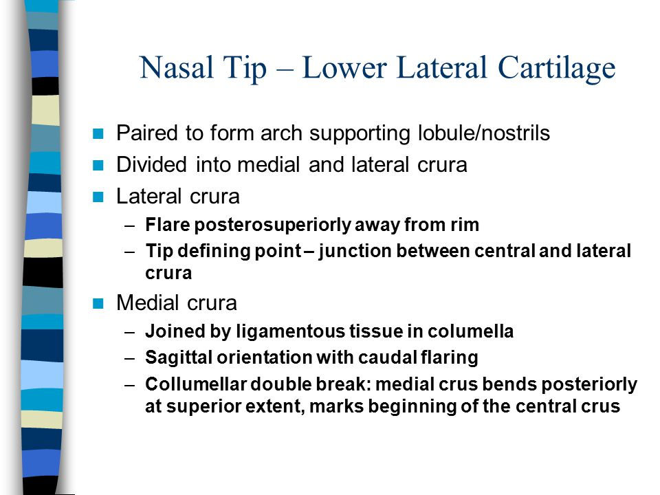 Nasal Tip – Lower Lateral Cartilage