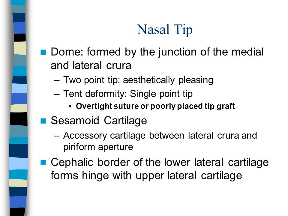 Nasal Tip Dome: formed by the junction of the medial and lateral crura