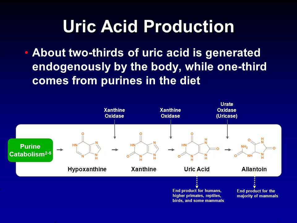 Uric Acid Production About two-thirds of uric acid is generated endogenously by the body, while one-third comes from purines in the diet.