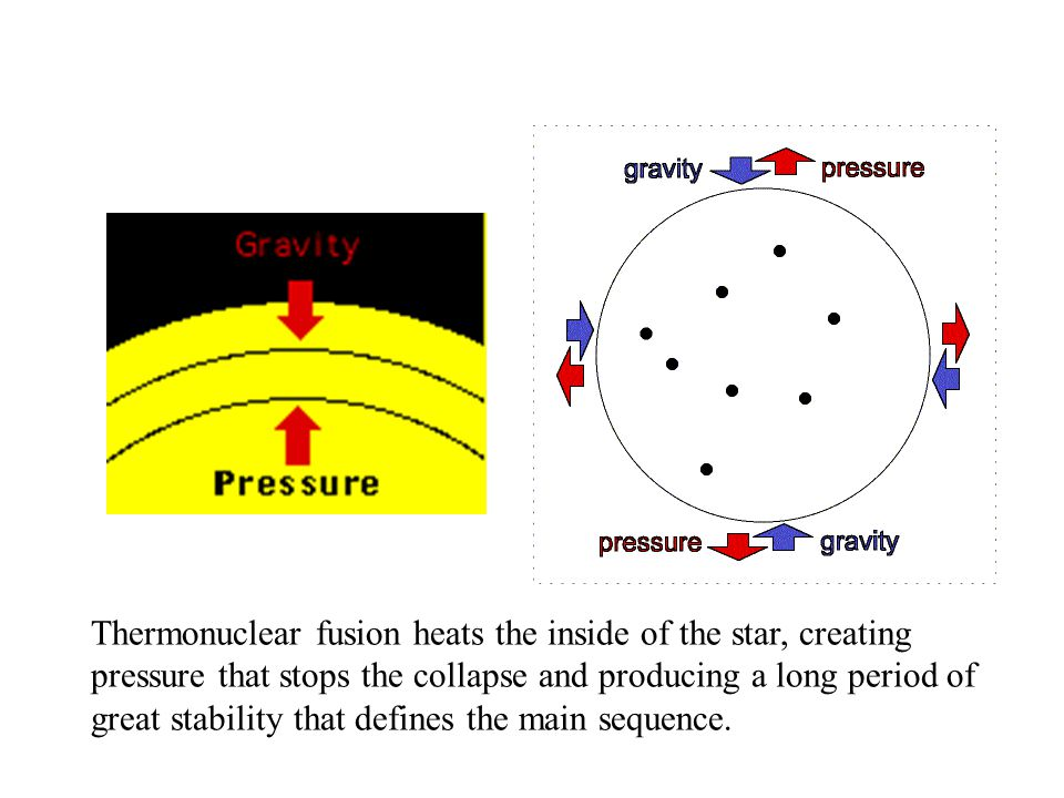 Thermonuclear fusion heats the inside of the star, creating pressure that stops the collapse and producing a long period of great stability that defines the main sequence.