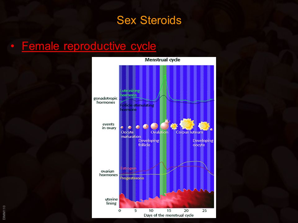 Sex Steroids Female reproductive cycle