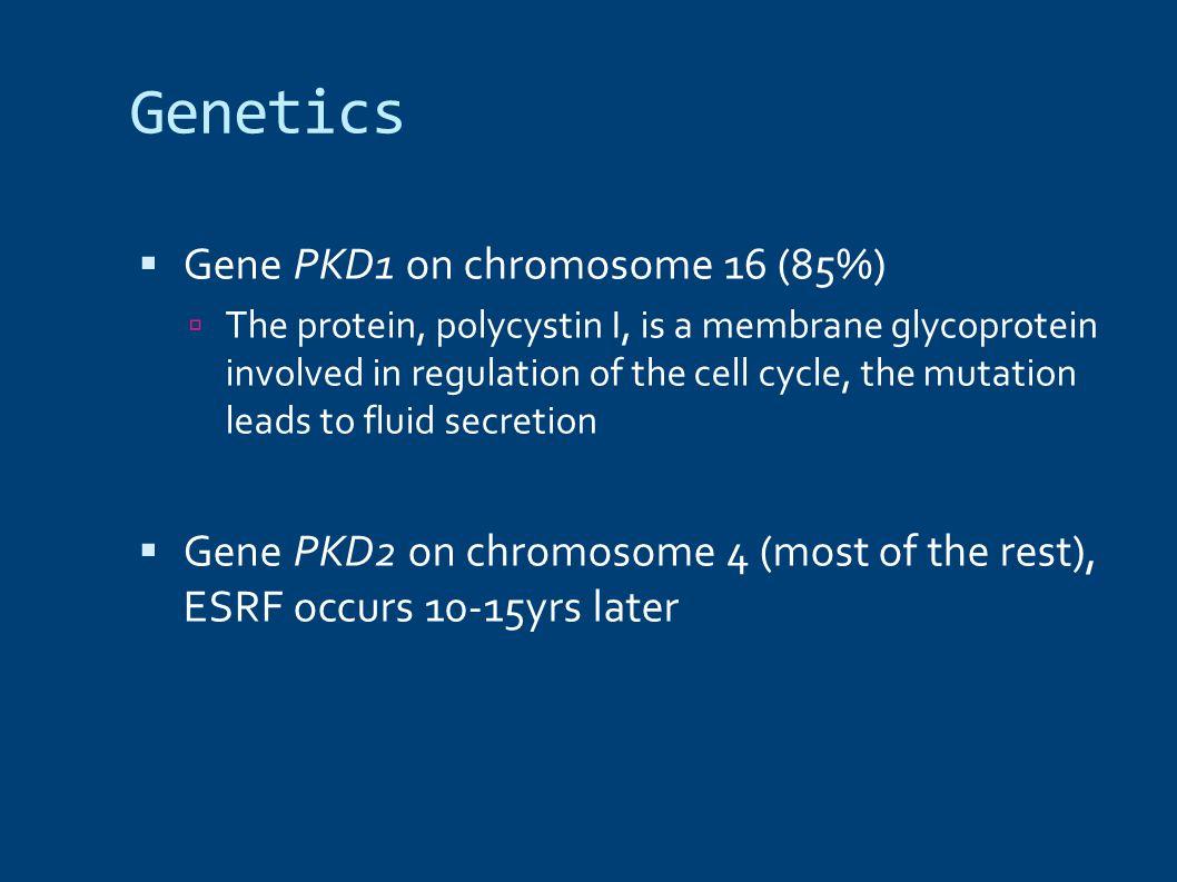 Genetics Gene PKD1 on chromosome 16 (85%)