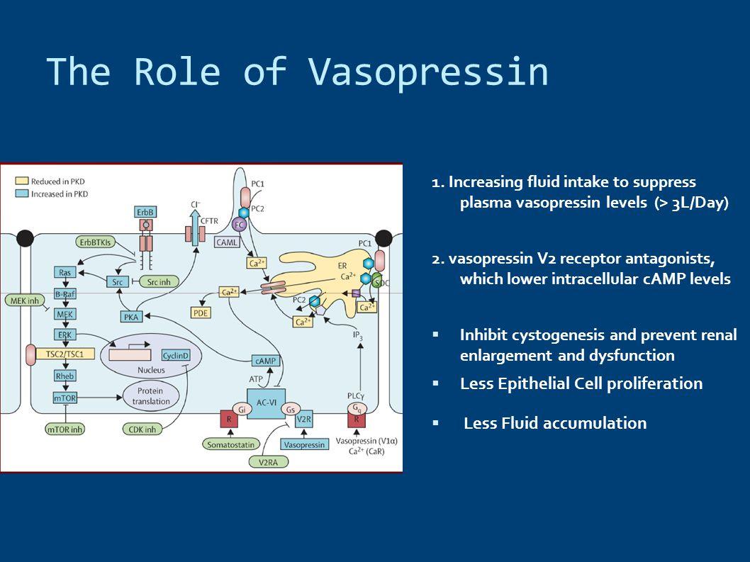 The Role of Vasopressin