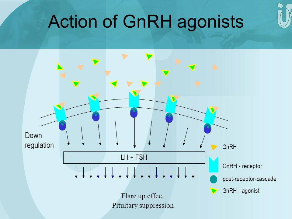 Action of GnRH agonists