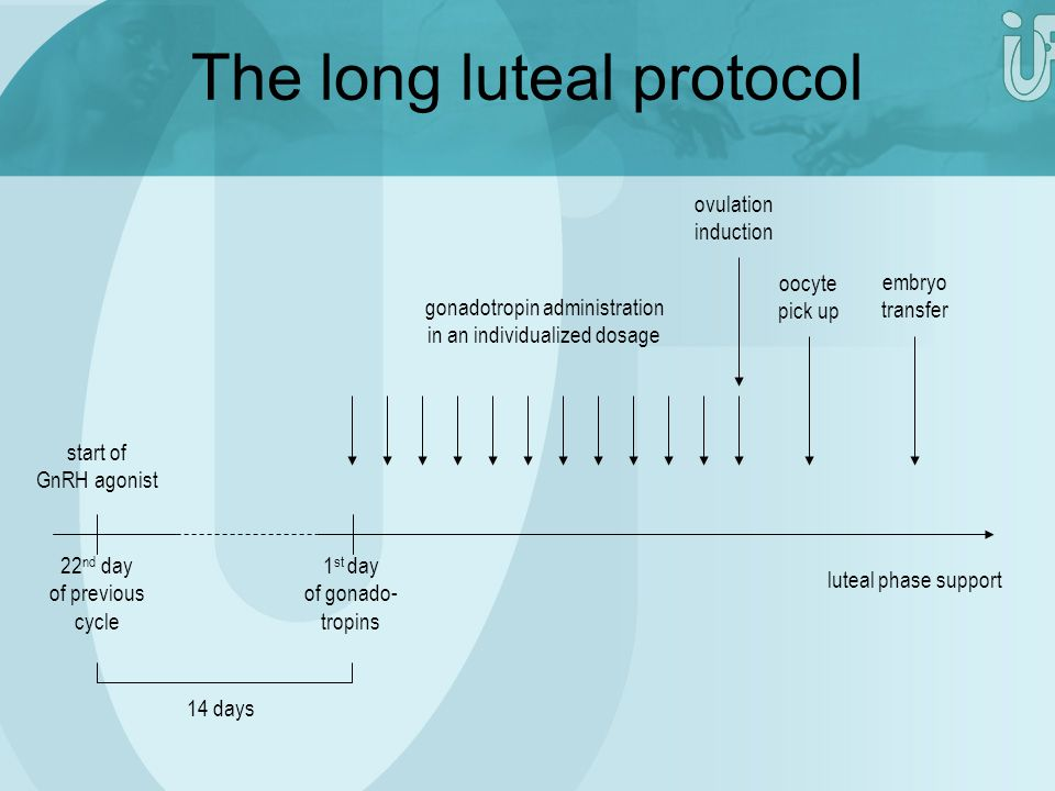 The long luteal protocol