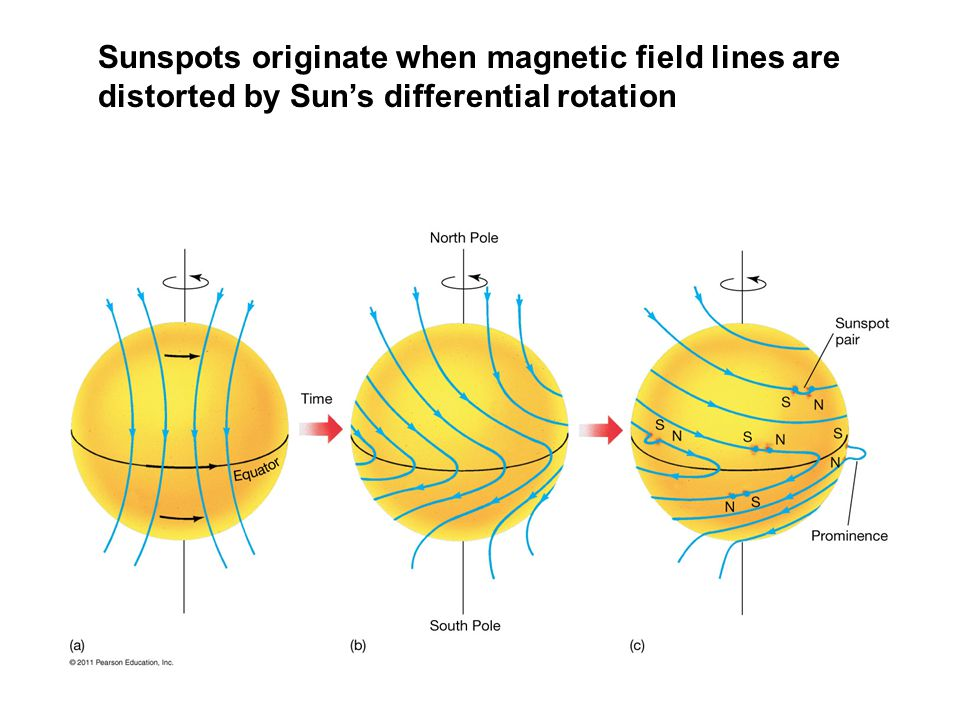 Sunspots originate when magnetic field lines are distorted by Sun's differential rotation