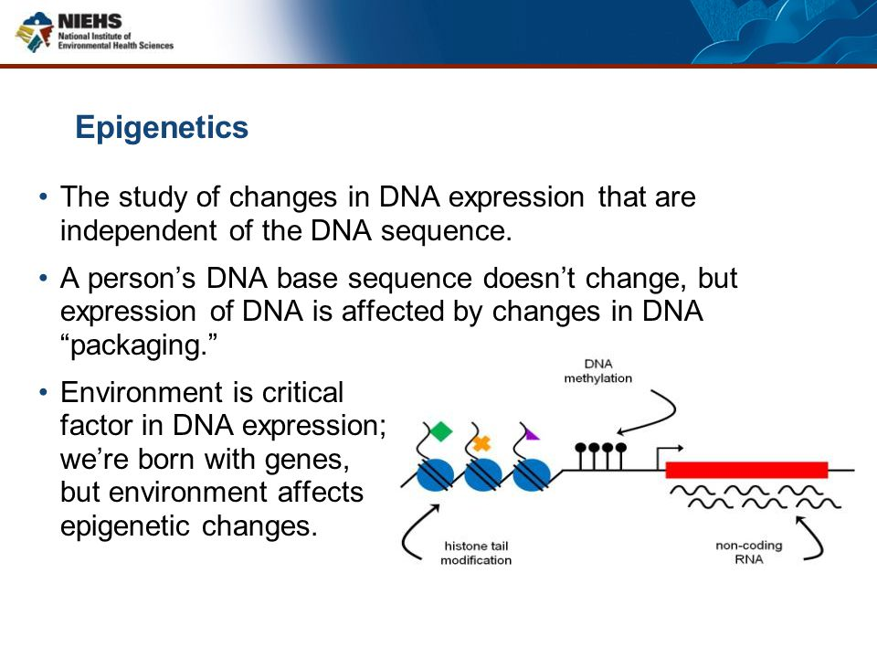 Epigenetics The study of changes in DNA expression that are independent of the DNA sequence.