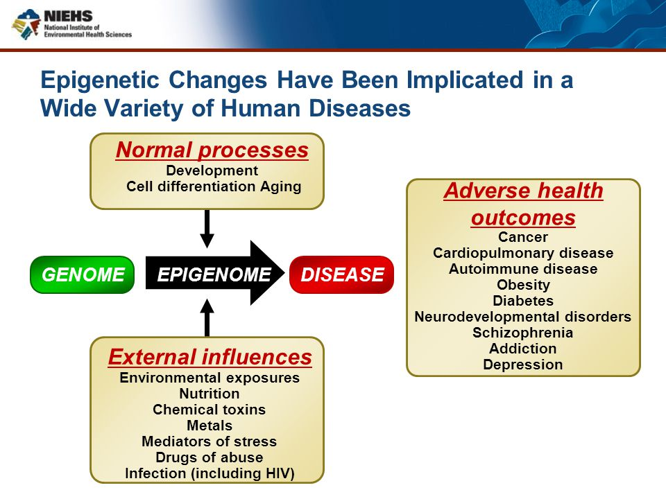 Epigenetic Changes Have Been Implicated in a Wide Variety of Human Diseases