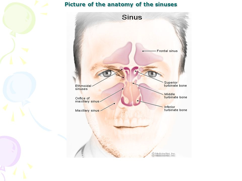 Picture of the anatomy of the sinuses