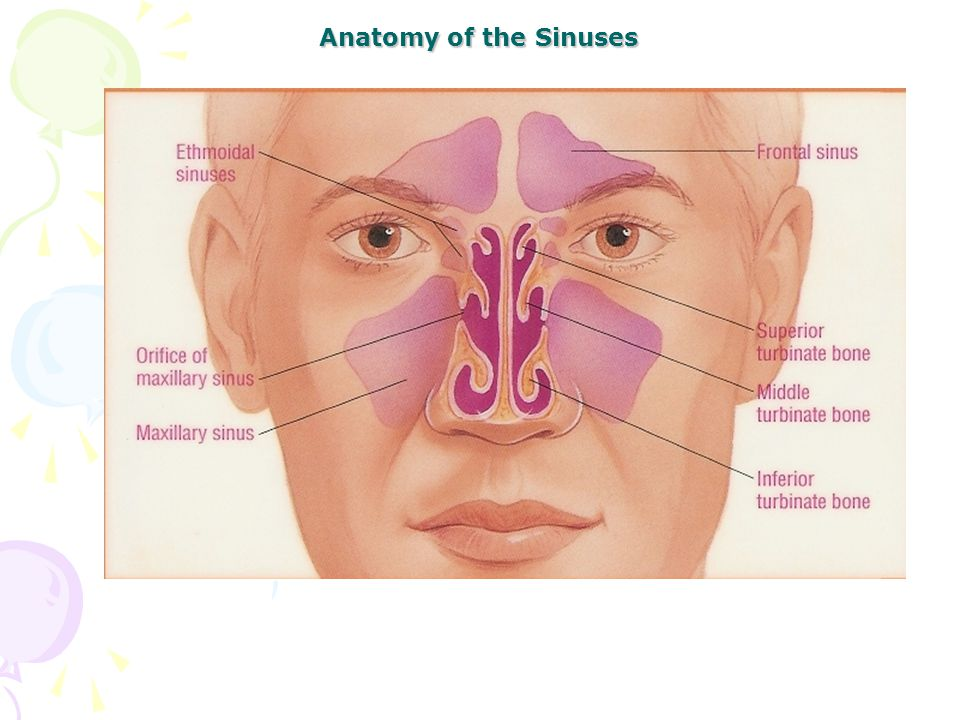 Anatomy of the Sinuses