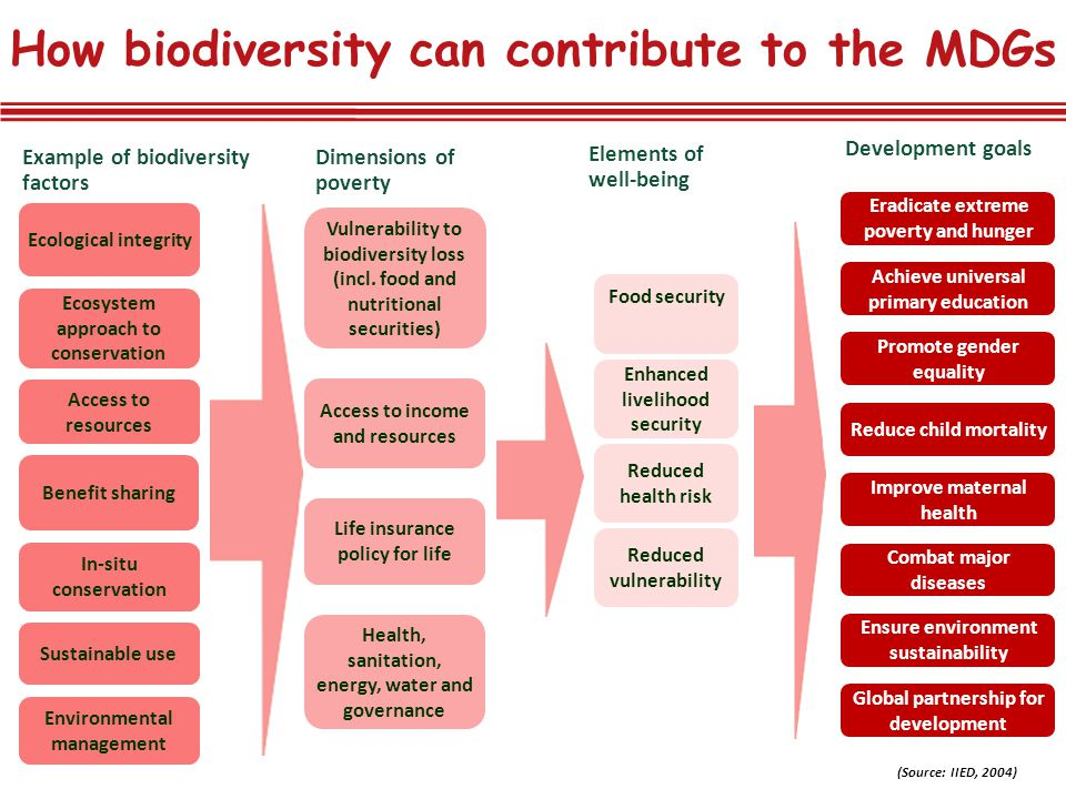 How biodiversity can contribute to the MDGs