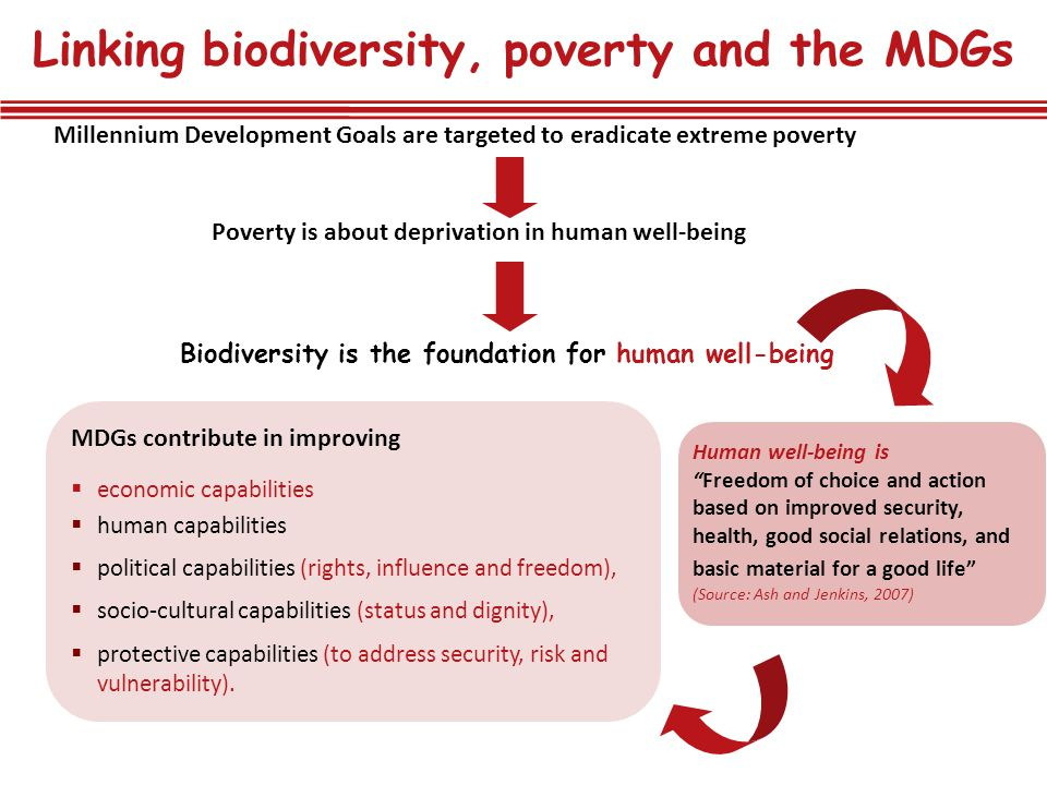 Linking biodiversity, poverty and the MDGs
