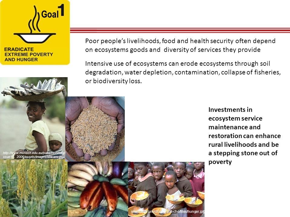 Goal Poor people's livelihoods, food and health security often depend on ecosystems goods and diversity of services they provide.