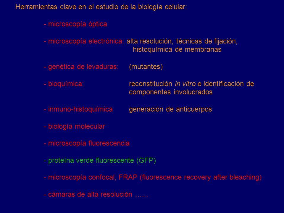 Herramientas clave en el estudio de la biología celular: