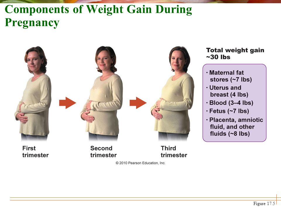 Components of Weight Gain During Pregnancy