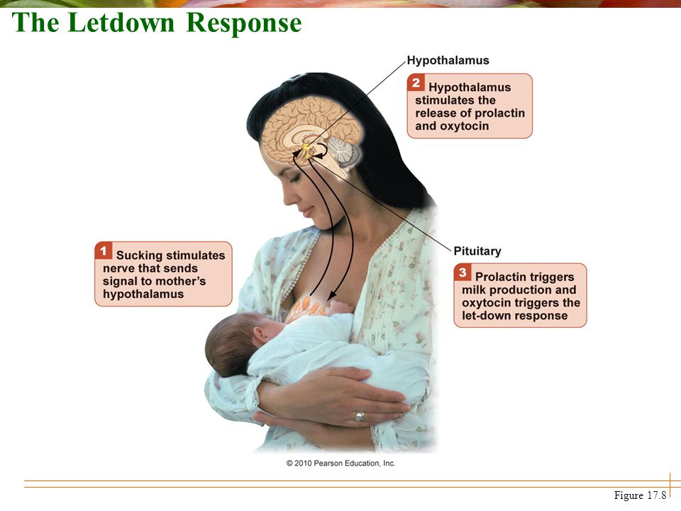 The Letdown Response Figure 17.8