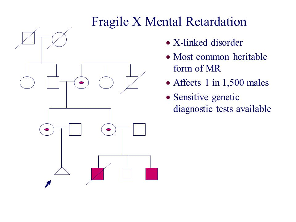 Fragile X Mental Retardation