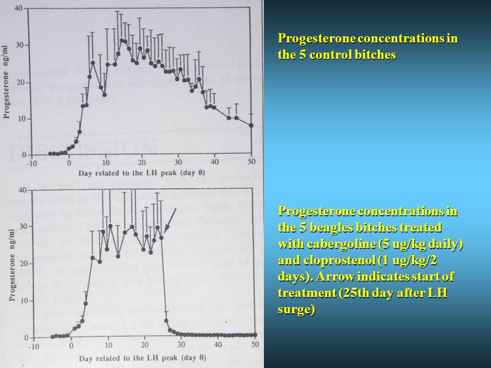 Progesterone concentrations in the 5 control bitches