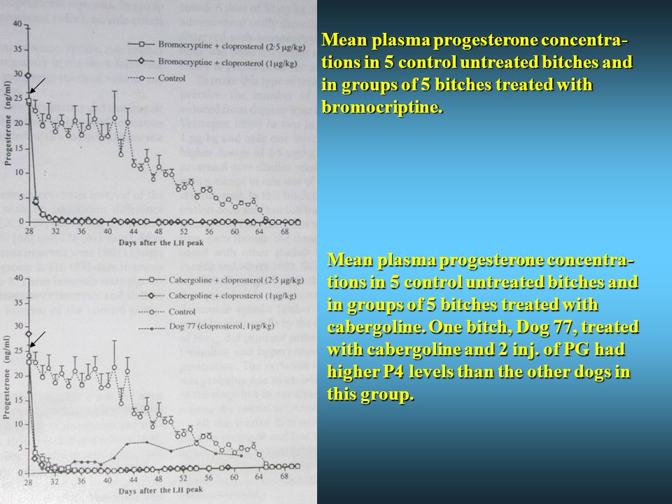 Mean plasma progesterone concentra-tions in 5 control untreated bitches and in groups of 5 bitches treated with bromocriptine.
