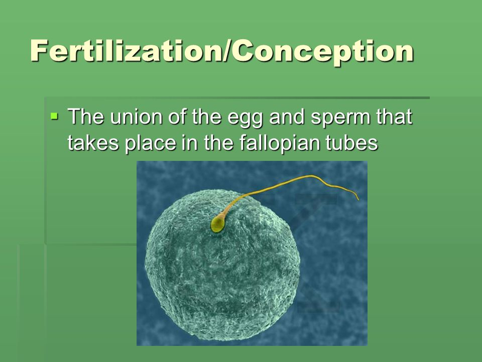 Fertilization/Conception