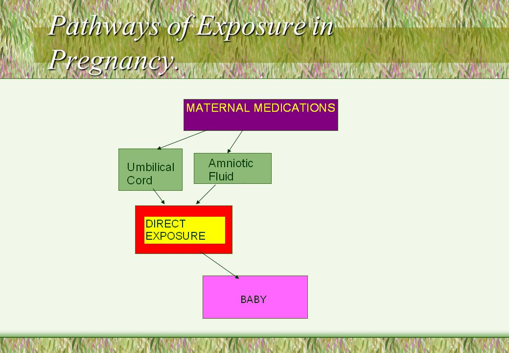 Pathways of Exposure in Pregnancy.