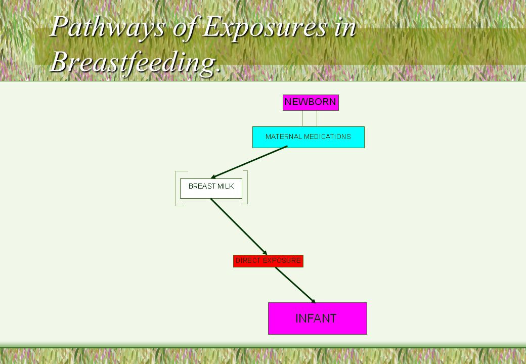 Pathways of Exposures in Breastfeeding.