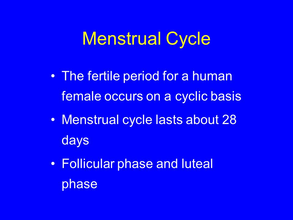 Menstrual Cycle The fertile period for a human female occurs on a cyclic basis. Menstrual cycle lasts about 28 days.