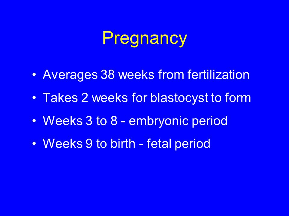 Pregnancy Averages 38 weeks from fertilization