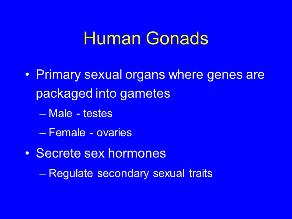 Human Gonads Primary sexual organs where genes are packaged into gametes. Male - testes. Female - ovaries.