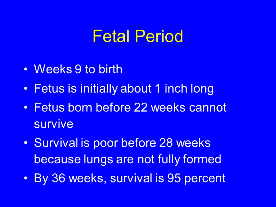Fetal Period Weeks 9 to birth Fetus is initially about 1 inch long