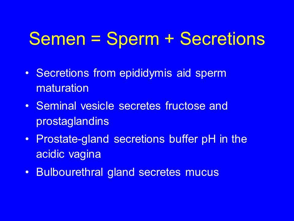 Semen = Sperm + Secretions