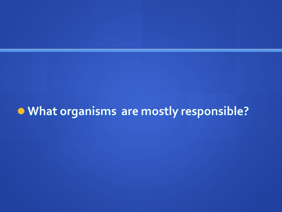 What organisms are mostly responsible