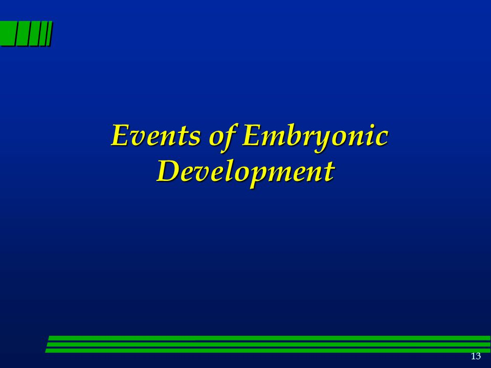 Events of Embryonic Development