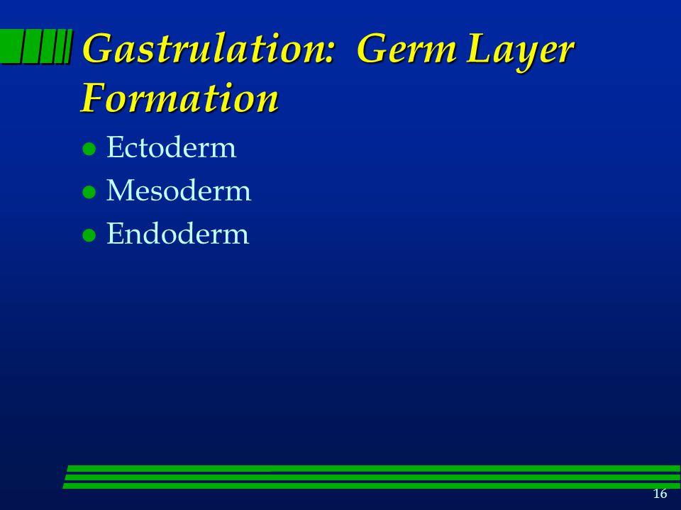 Gastrulation: Germ Layer Formation