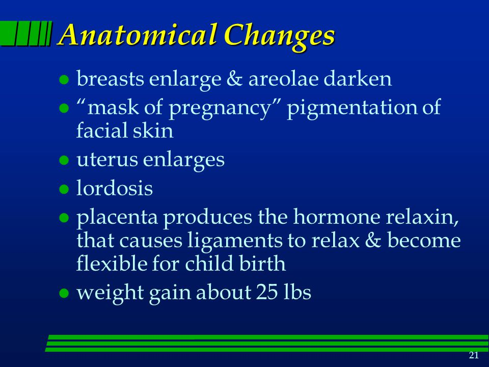 Anatomical Changes breasts enlarge & areolae darken