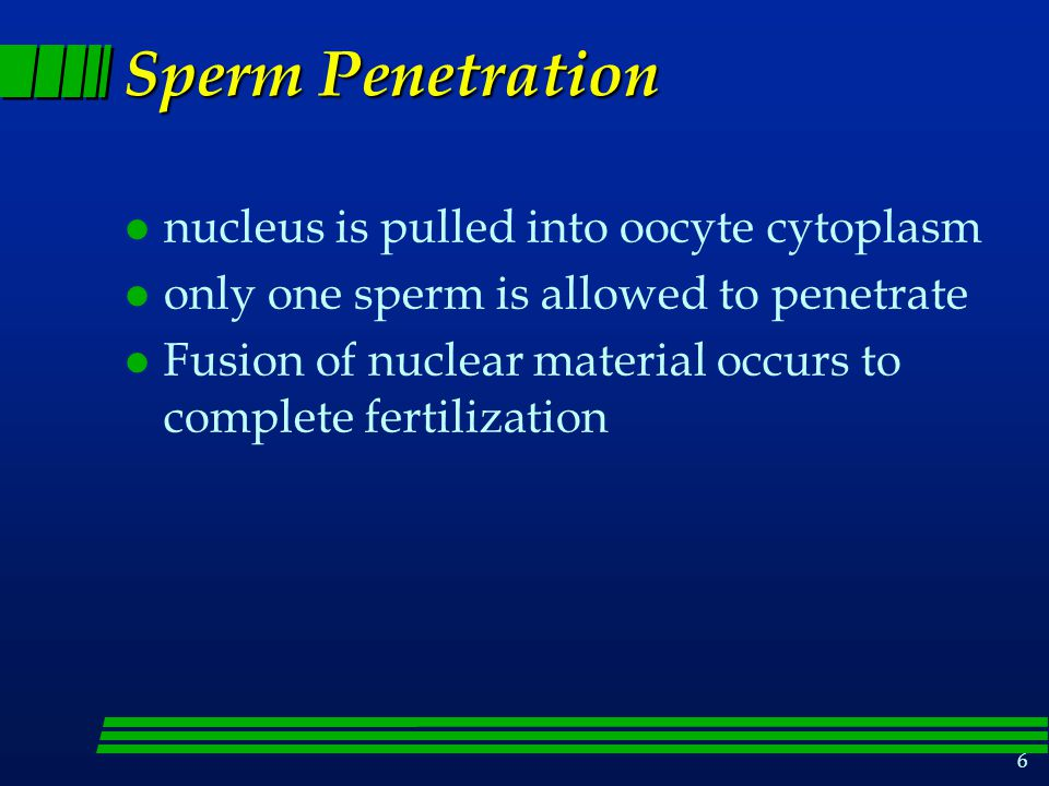 Sperm Penetration nucleus is pulled into oocyte cytoplasm
