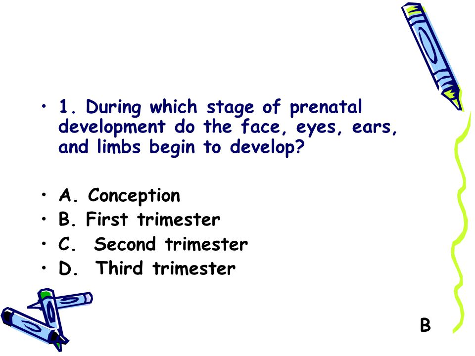 1. During which stage of prenatal development do the face, eyes, ears, and limbs begin to develop