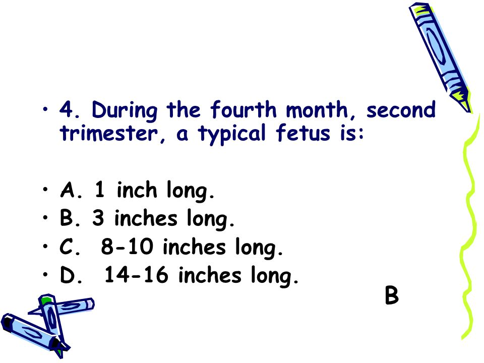 B 4. During the fourth month, second trimester, a typical fetus is: