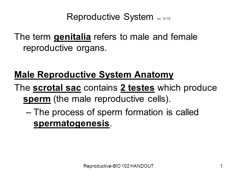Reproductive System rev 12-12