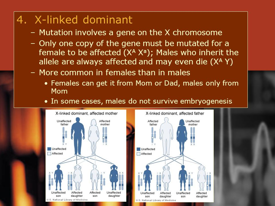 4. X-linked dominant Mutation involves a gene on the X chromosome