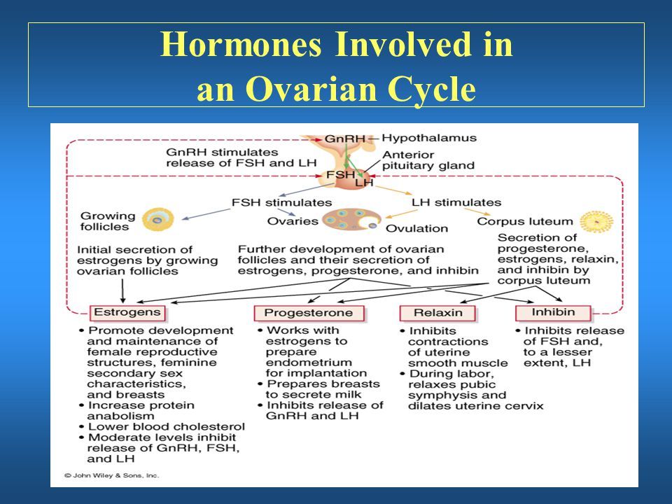 Hormones Involved in an Ovarian Cycle