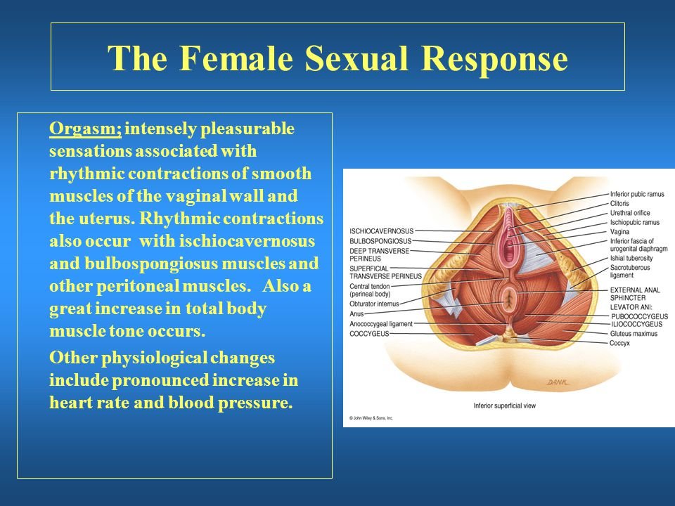 The Female Sexual Response